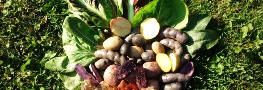 Investigadora UFRO apuesta por extraer pigmentos naturales e incorporarlos a la industria alimentaria