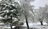 Lonquimay registró -15,7 grados durante esta madrugada